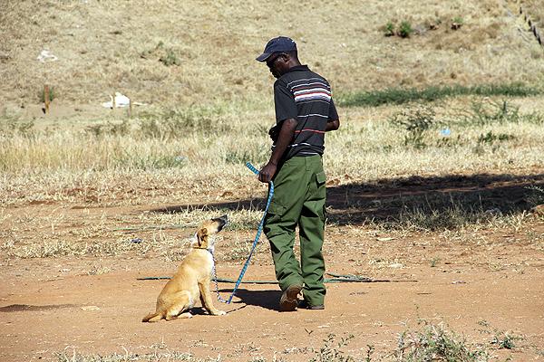 Botswana---Dog-Training